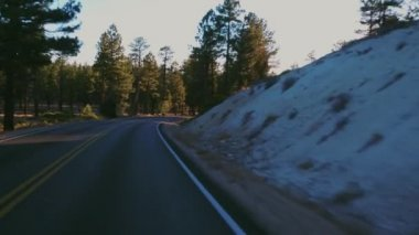 Beautiful forest at Bryce Canyon - POV drive