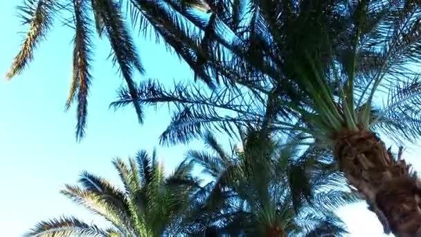 Palm paradise, věčné léto