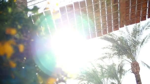 Egyptské slunce osvětluje mimořádného charakteru Afriky s jeho paprsky