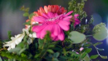 A fénysugarak a virág-ajándék