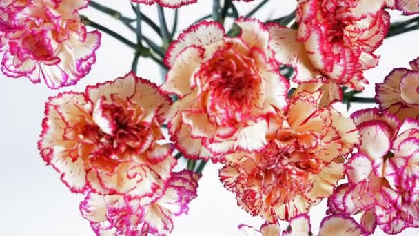 view from above, close-up, Flowers, bouquet, rotation on white background, floral composition consists of Carnation turkish Peach color