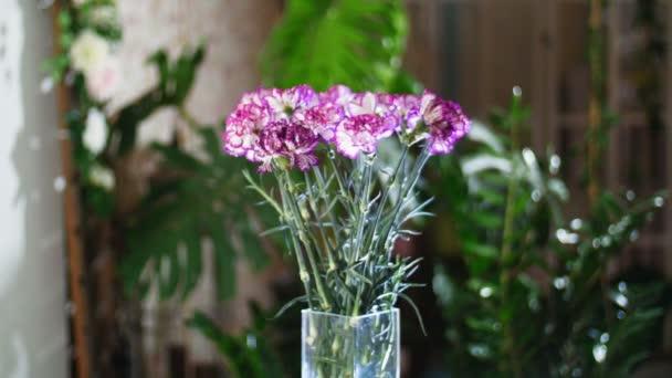 Kytice v paprscích světla, rotace, květinové kompozice tvoří zářivě fialové turecké karafiátu. V pozadí hodně zeleně