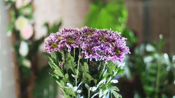 Kytice v paprscích světla, rotace, květinové kompozice tvoří fialová chryzantéma saba. V pozadí hodně zeleně