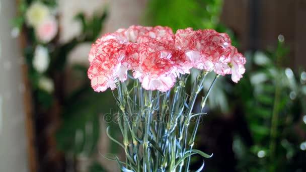 Kytice v paprscích světla, rotace, květinová kompozice se skládá ze světle růžové turecké karafiát v pozadí hodně zeleně