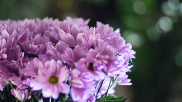 detail, kytice v paprscích světla, rotace, květinové kompozice tvoří fialová chryzantéma saba. V pozadí hodně zeleně