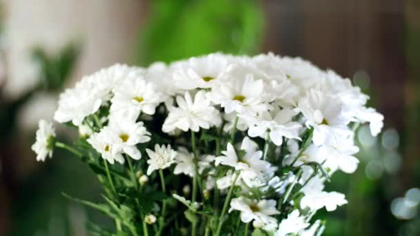 detail, kytice v paprscích světla, rotace, květinová kompozice se skládá z bílých chryzantém heřmánkový bacardi. V pozadí hodně zeleně