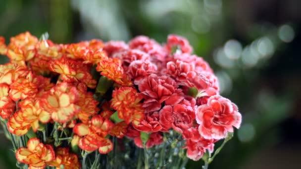 detail, kytice v paprscích světla, rotace, květinové kompozice tvoří zářivě žluté, oranžové a růžové turecké karafiátu. V pozadí hodně zeleně