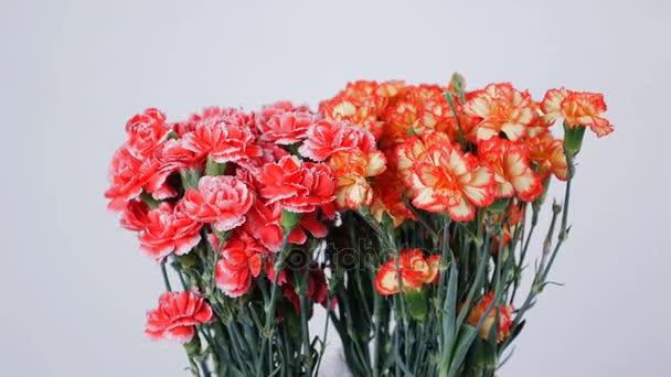 Květiny, kytice, otáčení na bílém pozadí, květinové kompozice tvoří zářivě žluté, oranžové a růžové turecké karafiát.