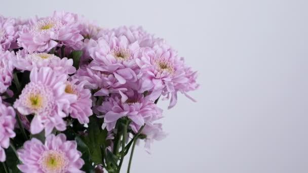 Közelkép, virág, csokor, forgatás, fehér háttér, virág kompozíció áll lila krizantém saba.