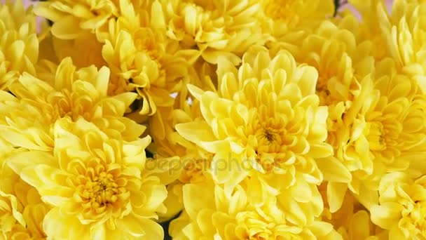 close-up, view from above, Flowers, bouquet, rotation, consists of yellow Chrysanthemum Chamomile .