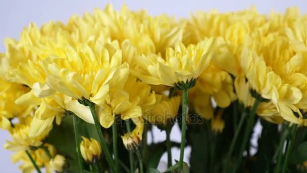Květiny, kytice, rotace na bílé pozadí, květinové kompozice tvoří žlutá chryzantéma heřmánek