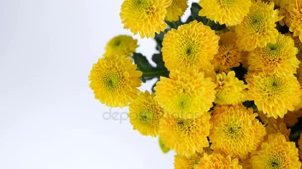 Közelkép, felülnézeti, virág, csokor, forgatás, fehér alapon sárga krizantém santini áll, virág kompozíció