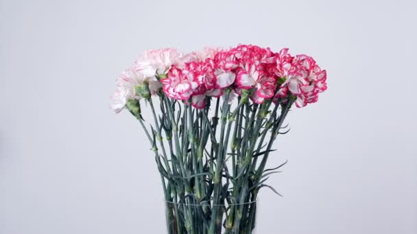 Flowers, bouquet, rotation, floral composition consists of Gently light pink turkish Carnation