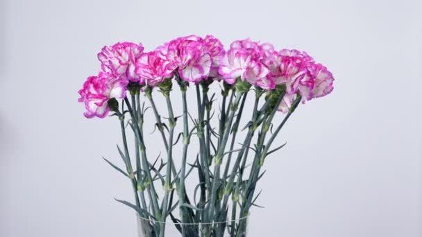 Květiny, kytice, rotace na bílé pozadí, květinové kompozice tvoří zářivě fialové turecké karafiát