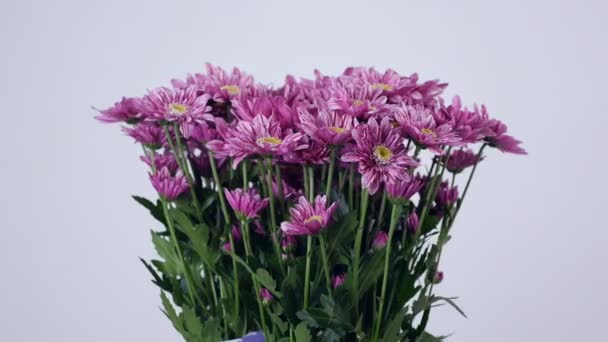 Flowers, bouquet, rotation on white background, floral composition consists of purple Chrysanthemum saba.