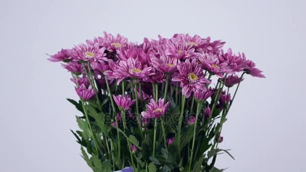Květiny, kytice, rotace na bílé pozadí, květinové kompozice tvoří fialová chryzantéma saba.