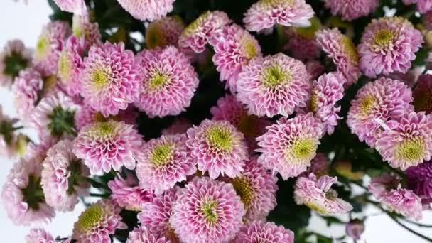 Közelkép, felülnézeti, virág, csokor, forgatás, fehér háttér, virág kompozíció áll rózsaszín Santini