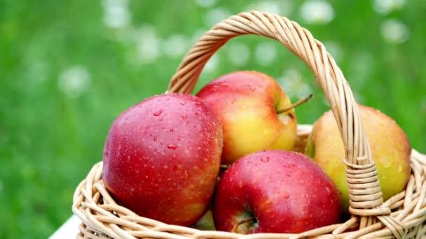detail. Krásná červená jablka v koši, uprostřed kvetoucí sedmikráska pole, trávník