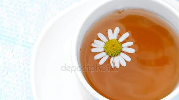 A close-up, a white cup with tea, a daisy flower floating on top of it