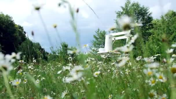 Among the chamomile lawn, against the blue sky is a white chair. On it a composition from a white jug, a white cup with tea, a batch and a bouquet of chamomiles.