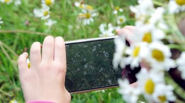 Close-up, a girl holding a phone, mobile, taking pictures of them, taking photos of a camomile lawn
