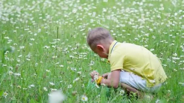 Dítě, chlapec, sedí v trávě mezi sedmikrásky a zkoumá jeho net, hmyz. V létě venku, v lese. Dovolená s dětmi