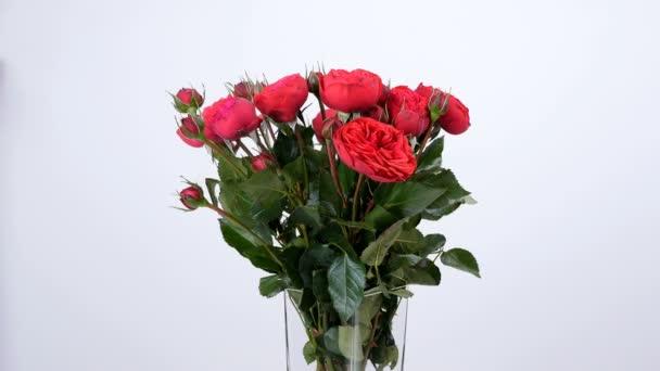 Květiny, kytice, rotace na bílé pozadí, květinové kompozice se skládá z růží Pinďa tvaru bordeaux