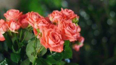 Közelkép, csokor virág, a sugarak a fény, forgatás, virág kompozíció áll narancssárga rózsák. Isteni szépség. a háttérben egy csomó zöld