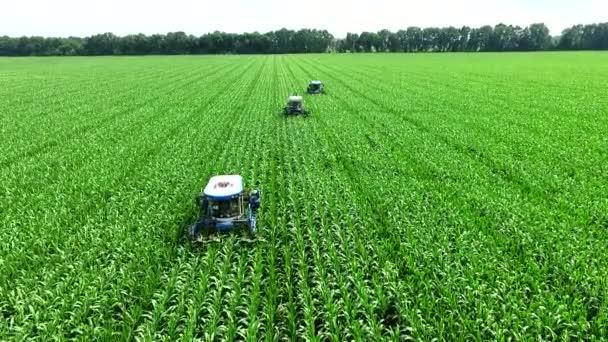 Mladé výhonky kukuřice na poli v řadách, farma pro pěstování kukuřice, zemědělské traktory parsovat, odstranit laterální mladé výhonky kukuřice, zvýšení výnosu kukuřičného pole.
