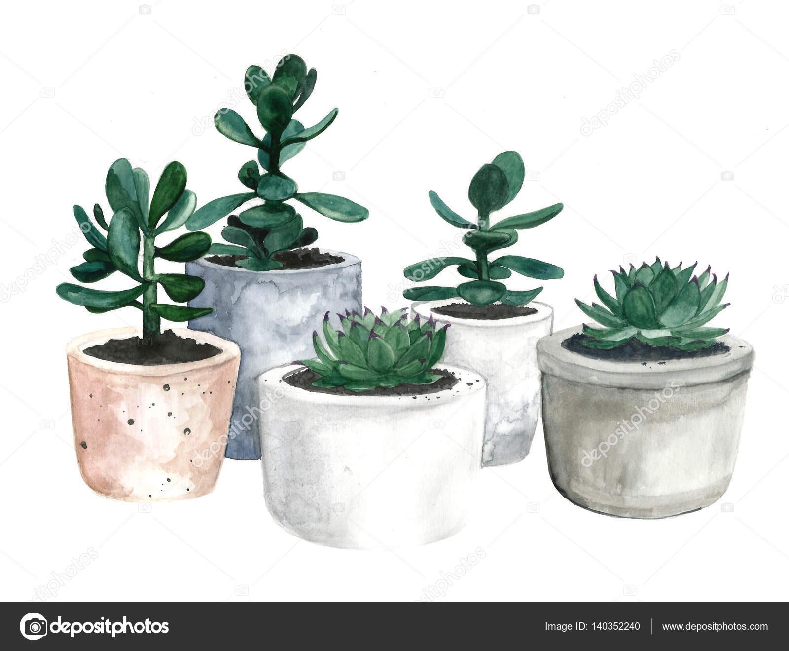 Akwarela Doniczki Z Kaktusów I Sukulentów Zdjęcie Stockowe