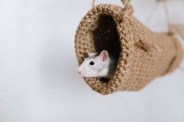 Mouse peeking out of the tunnel knitted on a white background