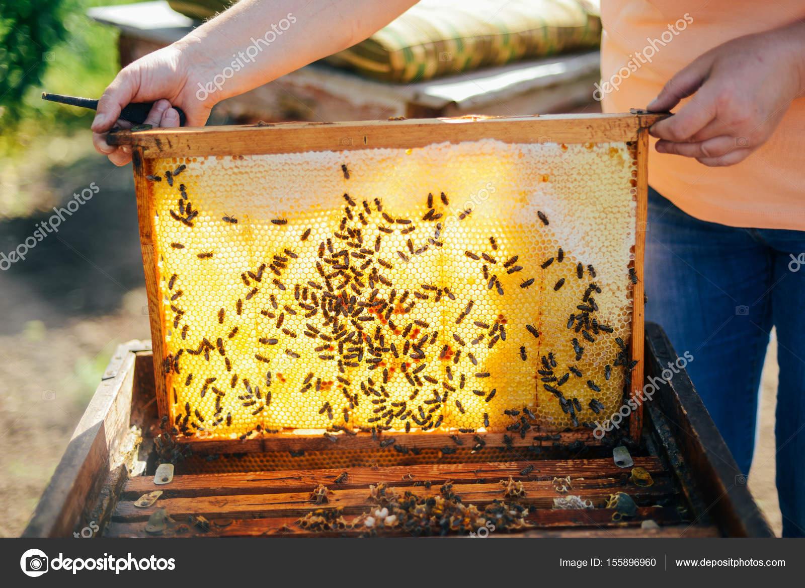 bilder von einem bienenstock imker honig zu ernten die biene raucher stockfoto ch ch. Black Bedroom Furniture Sets. Home Design Ideas