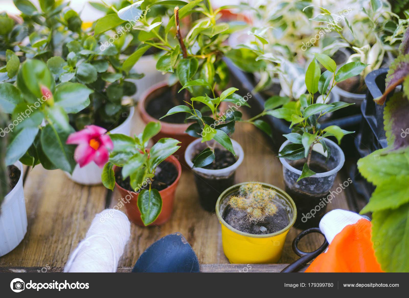 Gärtner Hand Die Pflanzen Blumen Topf Mit Schmutz Oder Erde U2014 Stockfoto