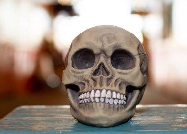 Decorative artificial human skull. Anatomical model. stock vector