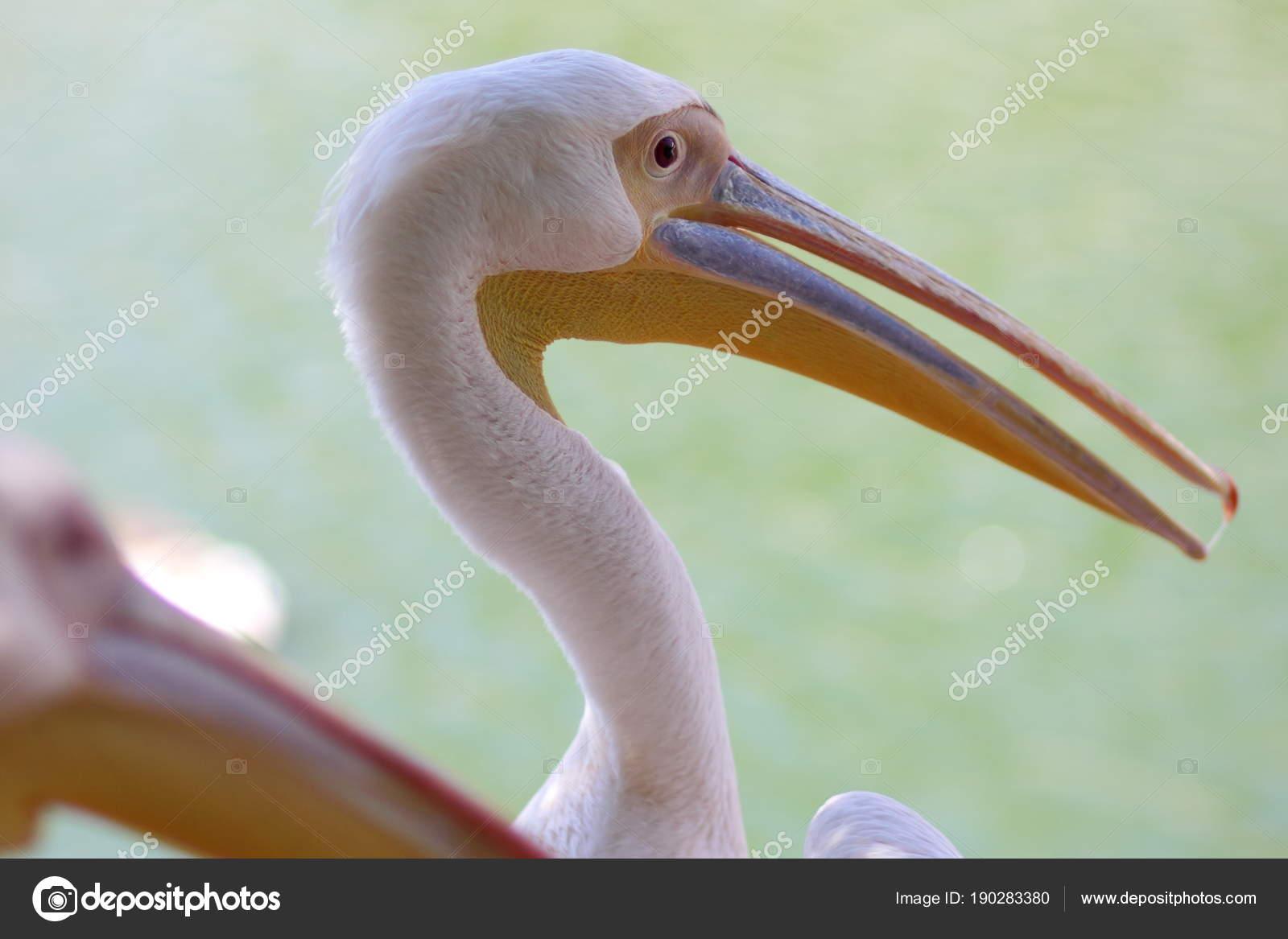 μεγάλο πουλί κεφάλια
