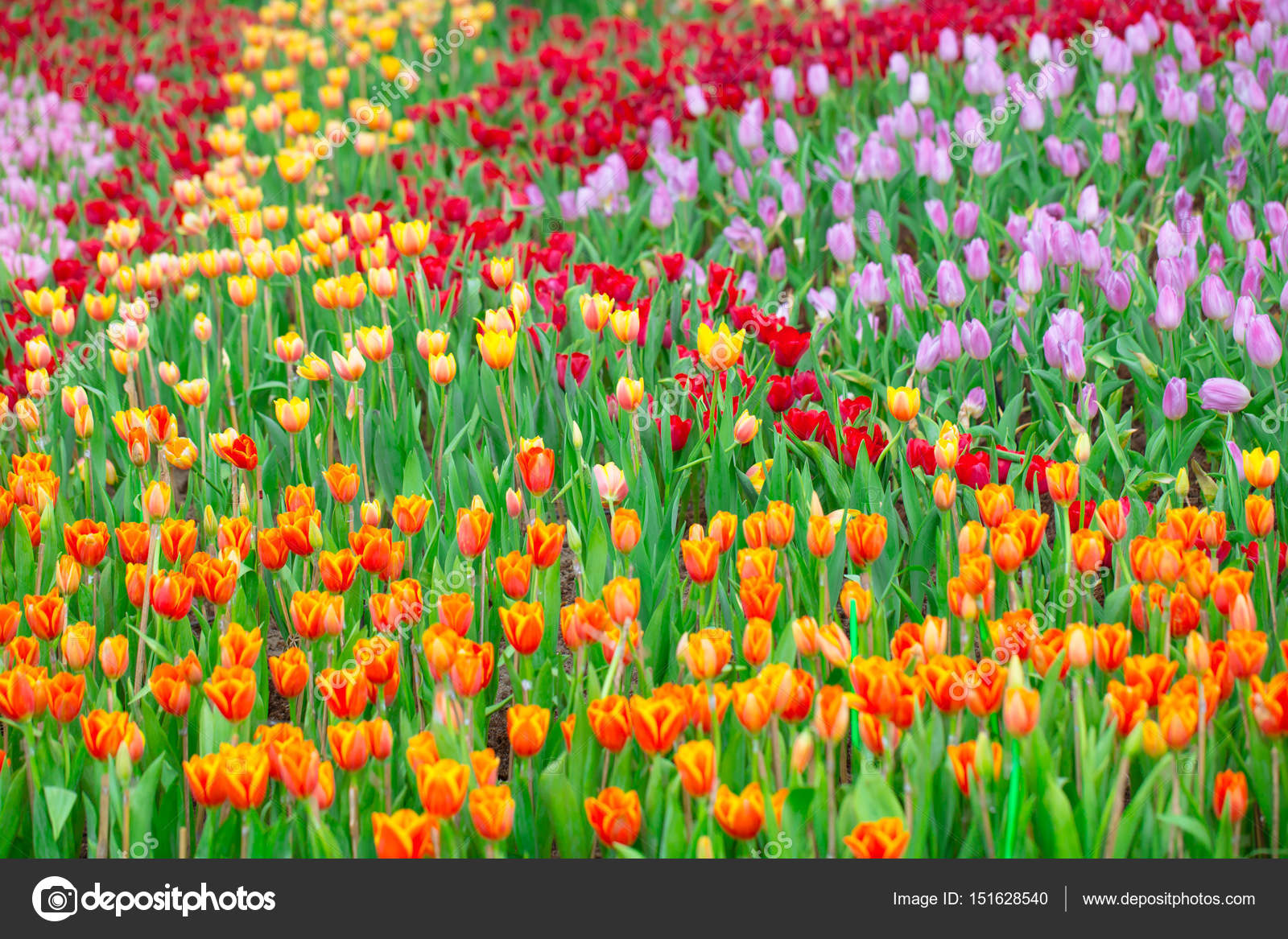 Открытка природа цветы 162