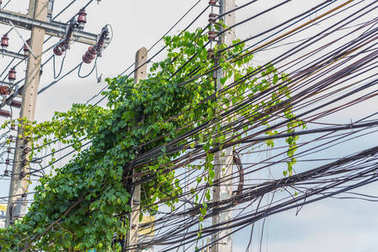messy communication cable and electric power line pole with creeper plants problem of cabling manage in Thailand