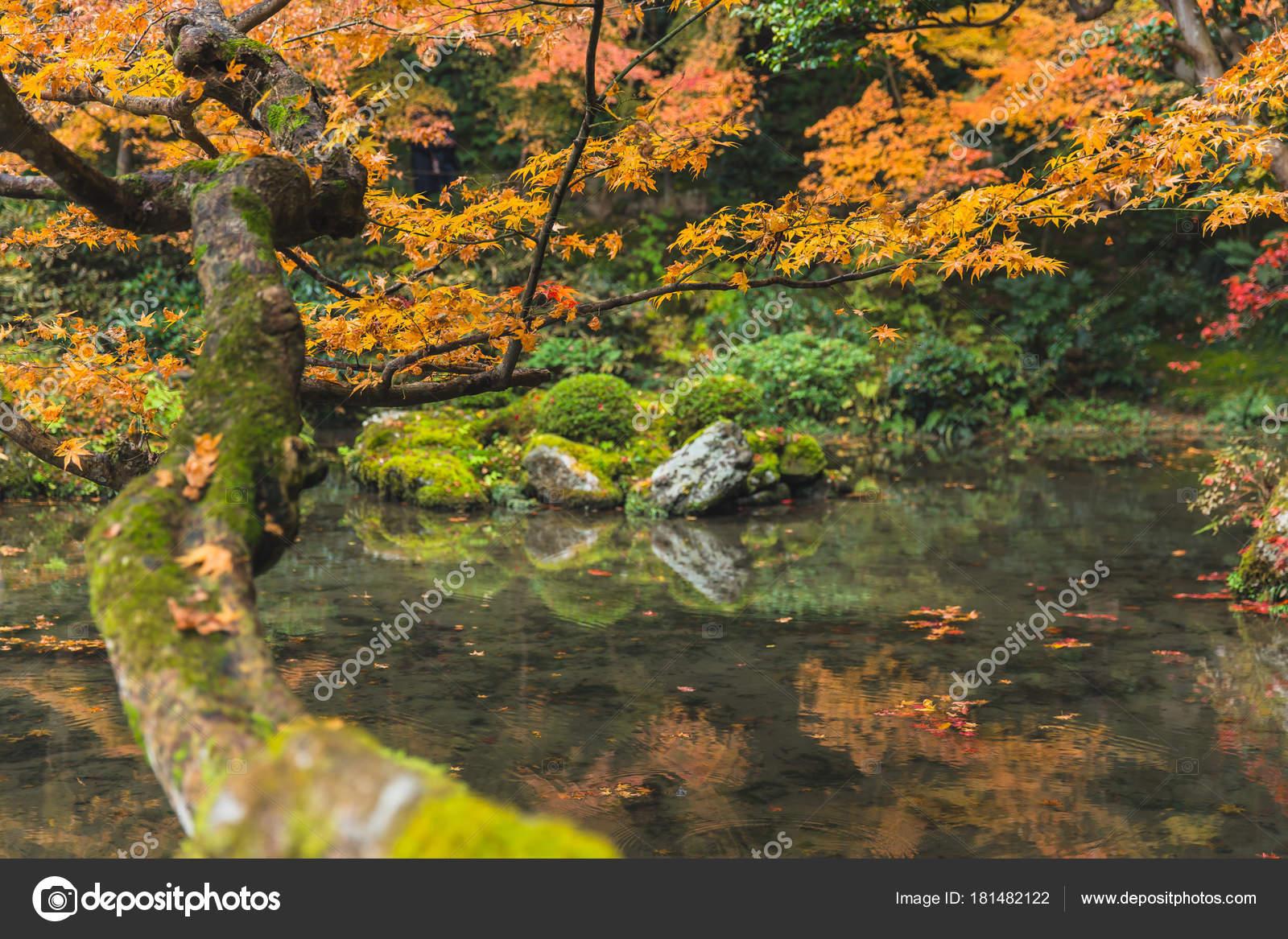 Autumn Maple Tree Pond Lake Forest Garden Kyoto — Stock Photo ...