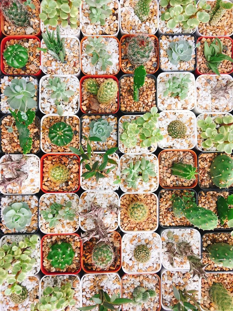Baby Cactus species pot tile pattern greenery plant for background home garden concept