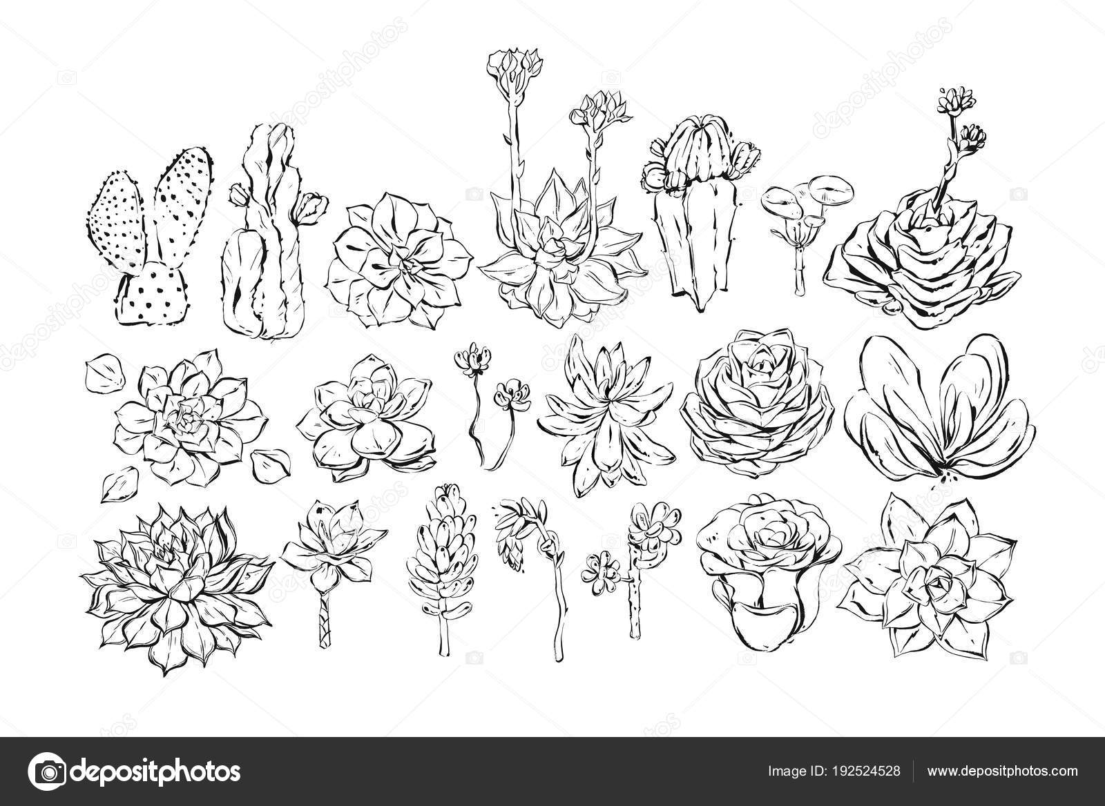 Textured Sketch Drawing Big Collection Set With Succulent And Cactus Flowers Isolated On White BackgroundWedding Birthday Decoration Elements