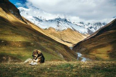 Dog against Enguri river and Shkhara mountain. Ushguli, Georgia
