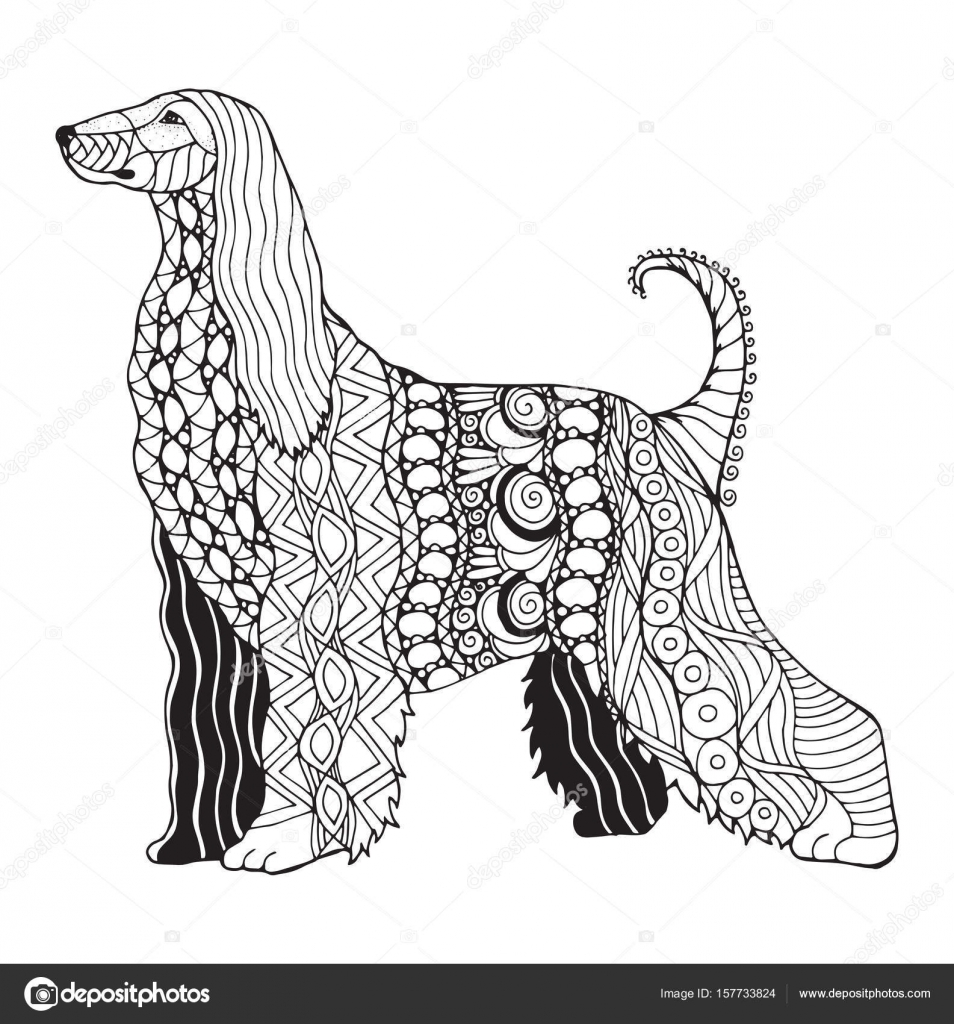 afghan hound zentangle stylized vector illustration