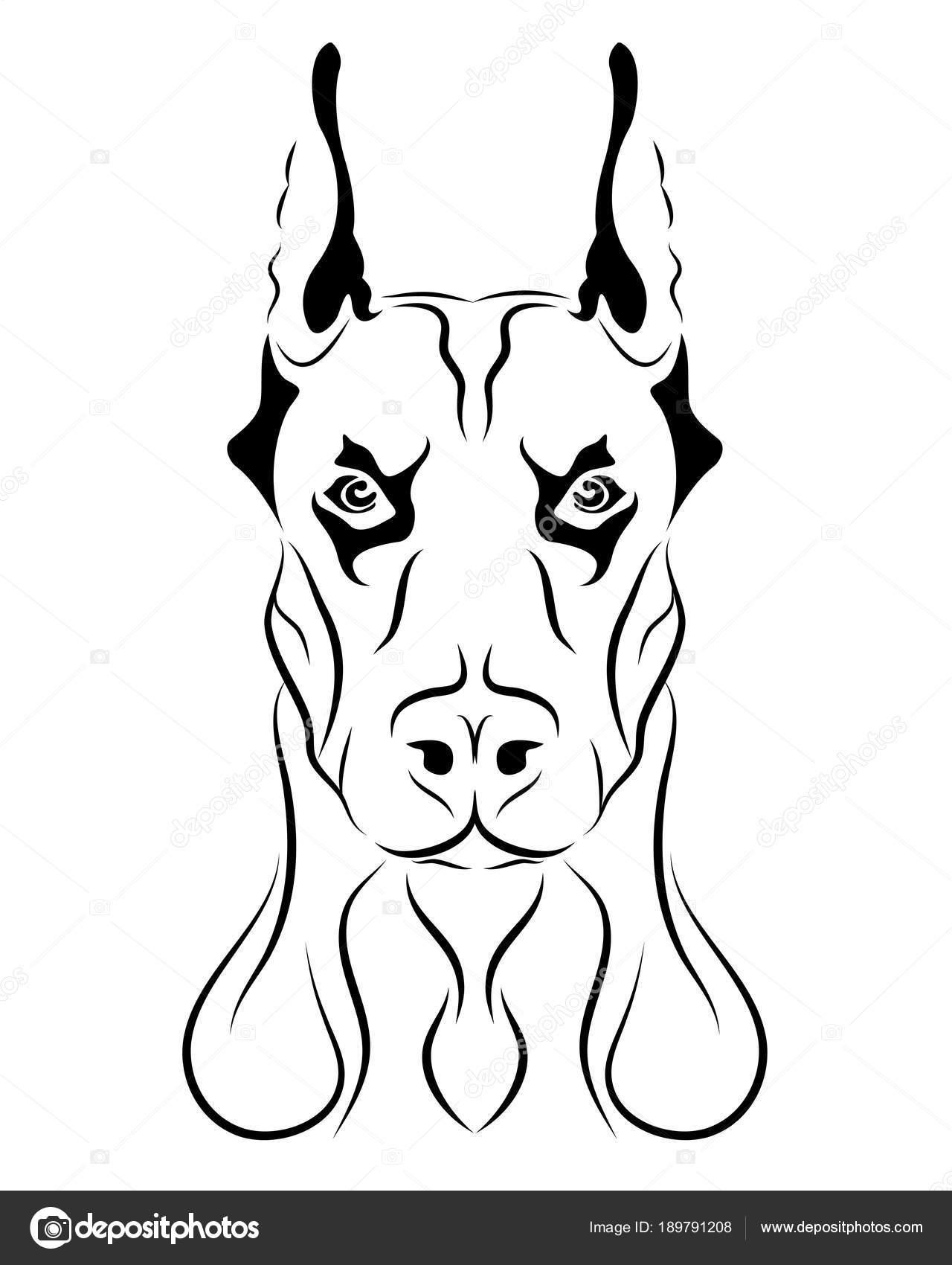 Doberman Köpek Hat Sanatı Kabile Serbest çizim Vektör çizim Stok