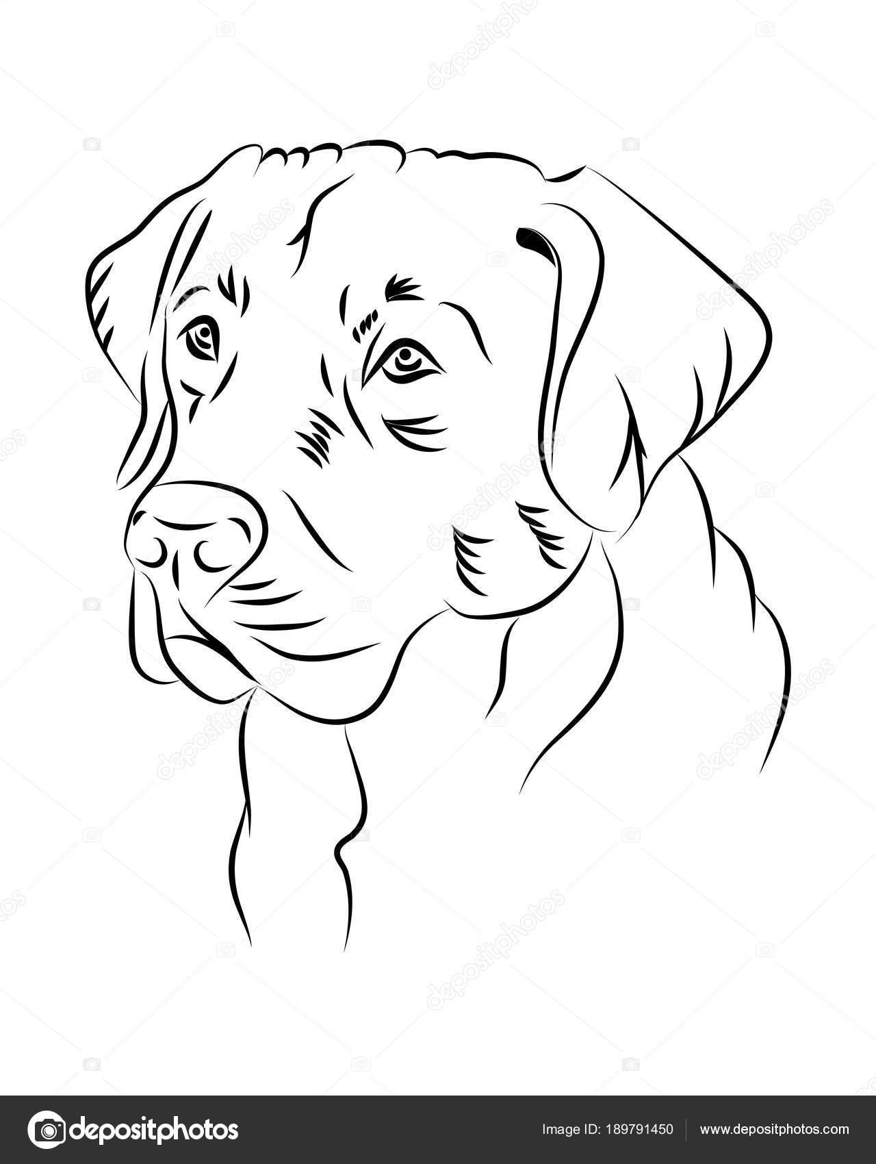 Desenho De Rosto De Cachorro Para Colorir Mmod