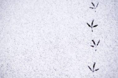 footprints of birds in the snow