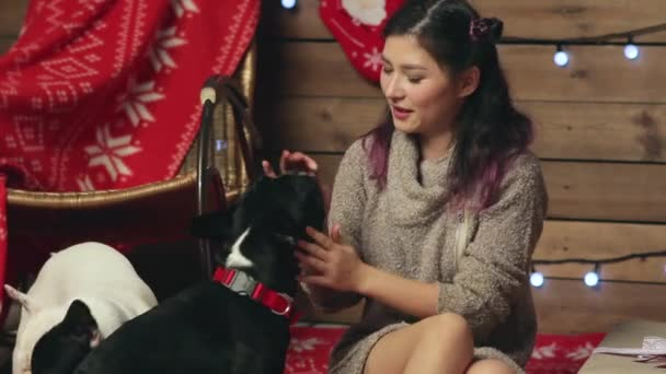 Pretty girl feeding french bulldogs at Christmas