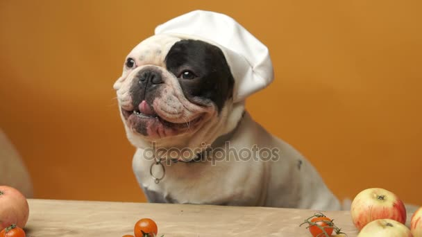 Lovely French bulldog in chief hat isolated