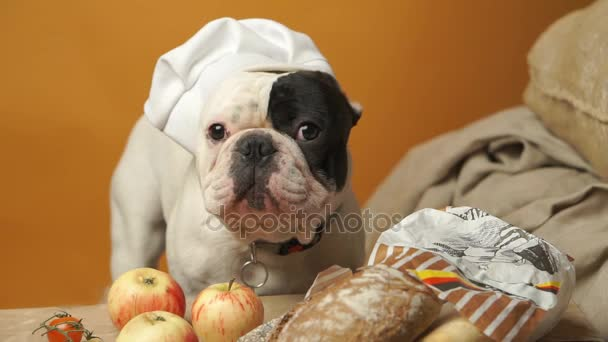 French bulldog in hat and healthy food