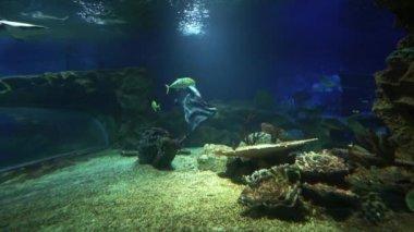 Pirate flag waving underwater in sea