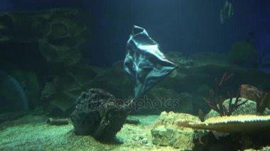 Pirate flag waving underwater